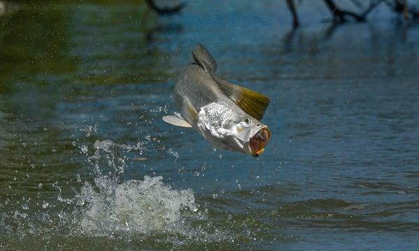 Arnhem Land Barramundi Lodge The Ultimate Fishing